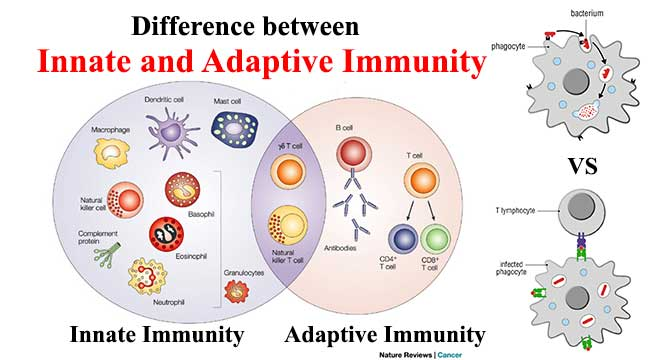 Difference between Innate and Adaptive Immunity