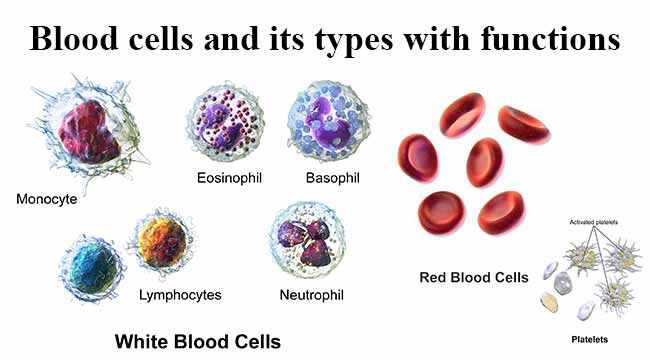 Blood cells and its types with functions